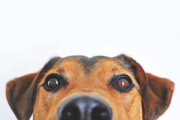 fundraiser dog