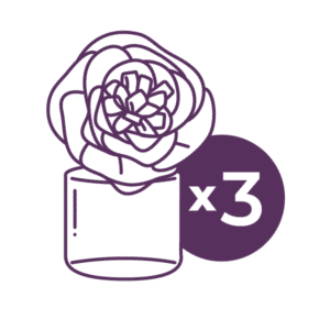 scentsy 3 pack fragrance flower