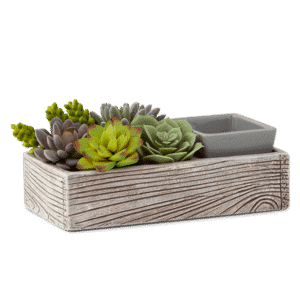 Succulent scentsy candle warmer