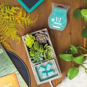 scentsy may warmer of the month
